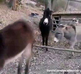 Top Best Animal Video 2019 - Funny videos 2019