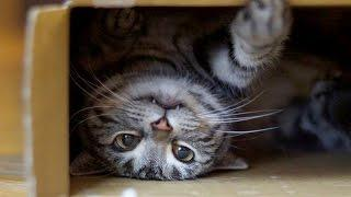 World's funniest cats and their best moments - Funny cat compilation