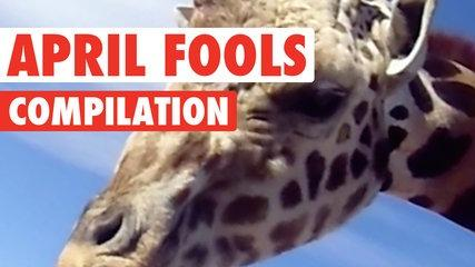 Not A Pet || Funny April Fool's Day Compilation