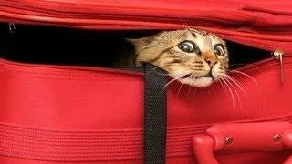 FUNNY CATS that will make your BELLY HURT FROM LAUGHING - Funny CAT compilation