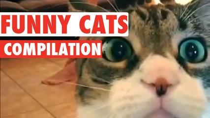 Funny Cats Video Compilation 2016