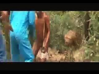Lion Attacking Funny Video