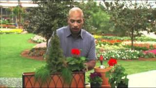 A Window Box for Any Season: Gardening Tips