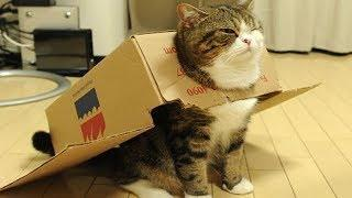 Cute is Not Enough -  Cats Doing Funny Things Videos #17
