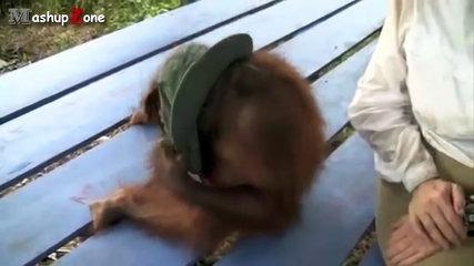 Funny Monkey Videos - A Funny Monkeys Compilation 2015