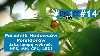 Spliff TV (14) Poradnik Hodowców Pomidorów: Jaką Lampę Wybrać: HPS, MH, CFL, LED?