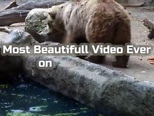 Cate Cute funny vide -must watch