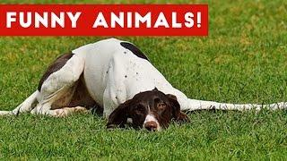 Funniest Animal Bloopers, Fails & Outtakes Compilation January 2017 | Funny Pet Videos