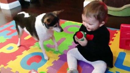 Funny Babies and Naughty Dogs are Best Friends Video_2019 Funny Videos 0600
