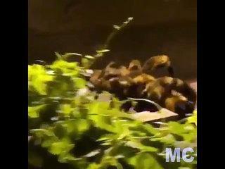 Funny Prank , Big Spider