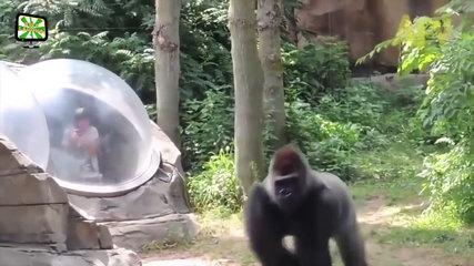 FUNNY Wild Animals Play & Attack Babies Fail Because Glasses in the Zoo   Funny Complilation