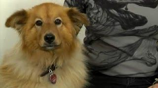 How To Keep Your Dogs From Scratching Their Rashes : How To Domesticate Your Dog