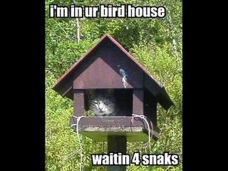 Funny Animals!!!