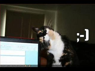 Very Funny Cats 24