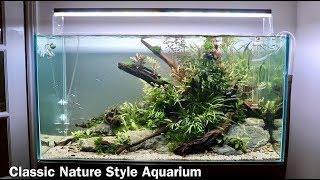 Nature Aquarium Aquascape Tutorial - Low Maintenance Home Aquascape Step by Step