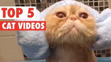 Top 5 Cat Videos || Funny Kitten Compilation