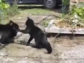 FUNNY ANIMAL THUG-LIFE VIDEOS..