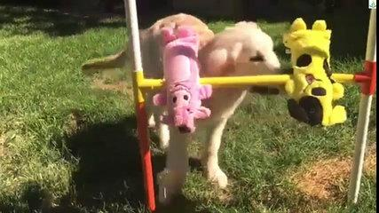 Cool dog - funny videos dog ,New 2016