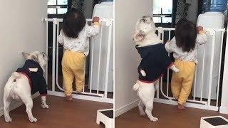 Funny And Cute French Bulldog | French bulldog Puppies | Funny dog videos try not to laugh #6