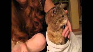 How To Assist Feed / Force Feed Cat By Syringe
