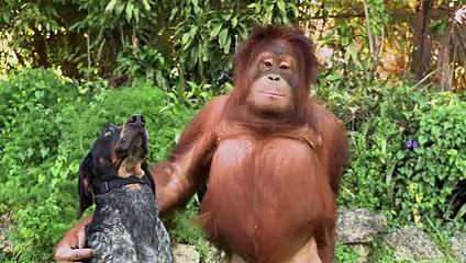 Android- Friends Forever, Funny And Impressing Video Of Animals