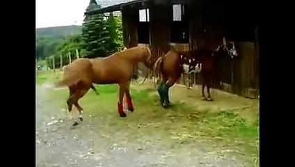 Animals Mate Animals  Caballos Culeadores  Cute Horse Animal Funny