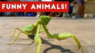 Funniest Pet & Animals Moments Caught On Tape Weekly Compilation 2016 | Funny Pet Videos