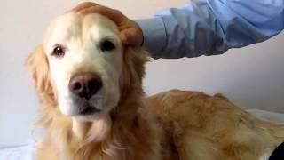 Dr. Victor Dolan Explains How To Keep Your Dog Healthy
