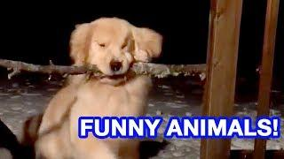 DOG STUCK WITH STICK | Funniest Pets and Animal Fails | AUGUST 2018