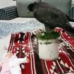 Eagle biting doll funny