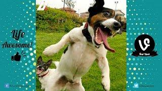Funny Animal 2017 Try Not to Laugh or Grin Funny Cat and Dogs Compilation 2017