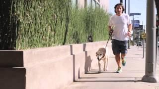 How To Keep Your Dog From Chewing On Deck Rails : Dog Behavior&Health
