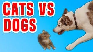Cats Vs. Dogs | Funny Animals Compilation