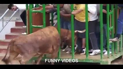 Bullfighting funny videos 2016 | awesome bullfighting Crazy bull attack people
