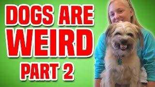 Dogs Are Weird - Part 2 | Funniest Dogs Compilation