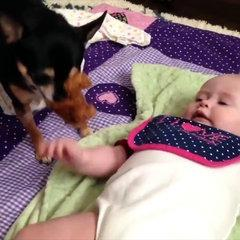 Cute puppies funny video