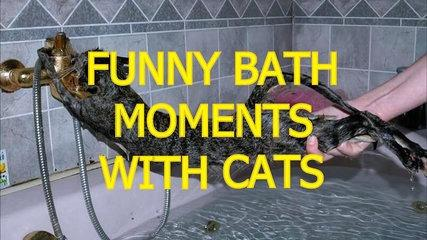 Cats just don't want to bathe - Funny cat bathing compilation