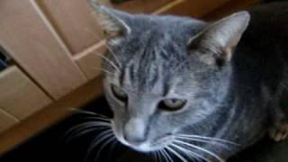 How To Feed Your Cat Medication / Pills The Easy Way!