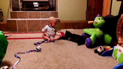 Baby And Cat Funny Fails Compilation  Video 2019 Funny Videos 0600