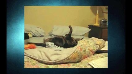 Funny Cats Video - Funny Cat Videos Ever- Funny Videos 2014 - Funny Animals Funny Animal Videos (4)
