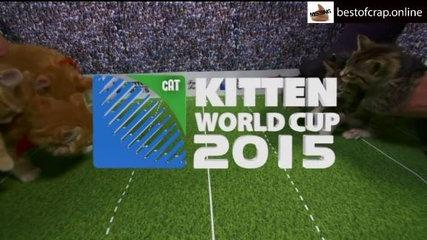 Kitten World Cup 2015 - Parody Skit. Very Funny #RWC2015