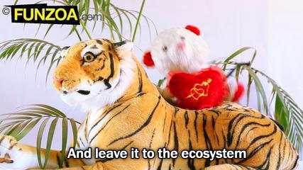 Shave The Tiger- Funny Mimi Teddy Song