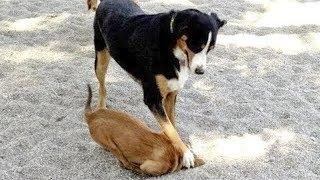 Animals Being Jerks - Funny Animals Compilation