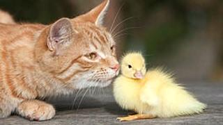 Funny Cats Meeting Cute Baby Animals Compilation [CUTE]