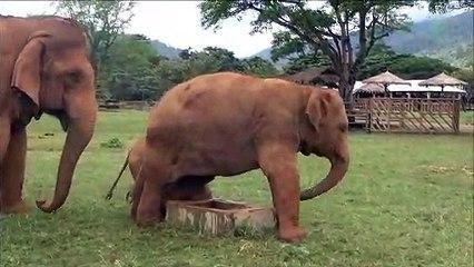 Cette maman éléphant interdit à son bébé d'approcher du puits