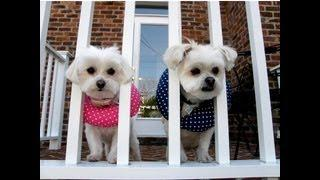 Puppy Bumpers - To Keep A Dog Inside The Fence