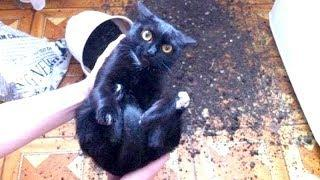 WARNING: You may DISLOCATE YOUR JAW FROM LAUGHING - Best FUNNY CAT videos