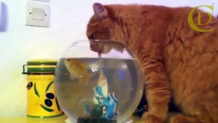 Unexpected Cat Funny animal jump, fall videos