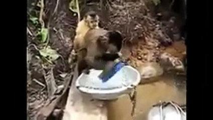 Funny Animals Behaving like Humans
