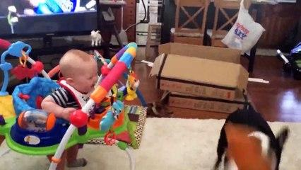 Funny Baby and Dog Playing Together Video_2019 Funny Videos 0600